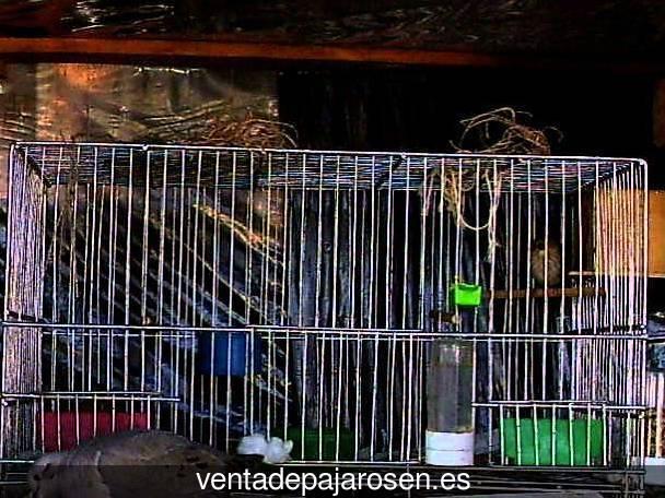 Venta de pajaros en bonastre tarragona venta de pajaros - Bonastre tarragona ...